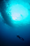 People diving. Divers interacting with wildlife in the reefs of the sea of cortez, Mexico Stock Photo