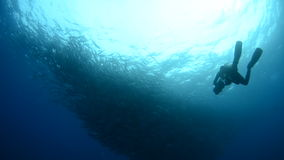 People diving stock video footage