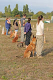 People with dogs. Group of people with purebred dogs in lesson of obedience Royalty Free Stock Photo