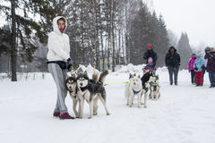 People and dogs during the celebration of the end of winter name Stock Photography