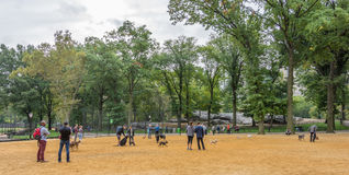 People and dogs at Central Park, New York City. NEW YORK CITY - OCT. 8, 2016: People playing with their dogs in a dog yard at Central Park`s Heckscher Playground Royalty Free Stock Photos