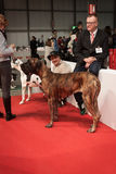 People and dogs at the international dogs exhibition of Milan, Italy Royalty Free Stock Photos