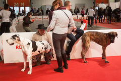 People and dogs at the international dogs exhibition of Milan, Italy Stock Photos