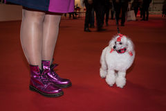 People and dogs at the international dogs exhibition of Milan, Italy Stock Image