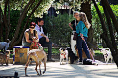 People with dogs. This is street photography: A group of people with dogs Stock Photo