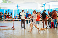 People and dogs visit exhibition -International Stock Image