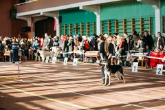 People and dogs visit Palace athletics exhibition Royalty Free Stock Photos
