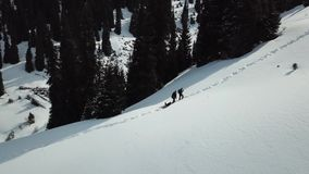 People and dogs walk in the mountains along a snowy path among the firs. Slowly I fly up on the drone. Two men are walking along the snow, a snow trail rising stock video footage