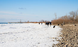 People and dogs walking on frozen Lake Ontario Royalty Free Stock Photo