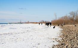 People and dogs walking on frozen Lake Ontario. People and dogs walking on the shore of frozen Lake Ontario Royalty Free Stock Photo