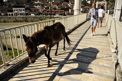 People and donkey on a bridge in Berat Stock Image