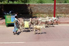 The people with donkeys around the street on the way to Taj Mahal in Agra. Taken in India, August 2018 stock image