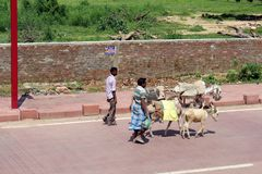 The people with donkeys around the street on the way to Taj Mahal in Agra. Taken in India, August 2018 royalty free stock images