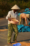 People dry maize of good crop Stock Images