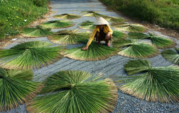 People dry rush (sedge)  in sector shape Stock Photography
