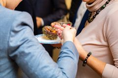 People eat sea urchin in a restaurant. Close-up stock images