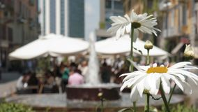 People eating and drinkin in Corso Como, Milan, Italy. Flowers in the foreground, soft focus.  stock footage