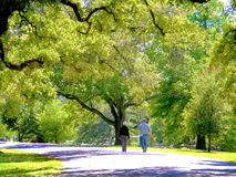 People-Elderly Coupe Waking on a Spring Day in the Park. People-Elderly Coupe Waking on a Spring Day in the Audubon Park in New Orleans, Louisiana on a Spring Stock Photos