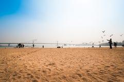 People enjoy the beach and feeding seagull at Gwangalli beach Royalty Free Stock Photo