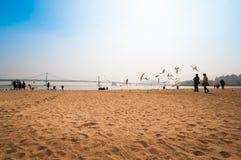 People enjoy the beach and feeding seagull at Gwangalli beach Stock Photos