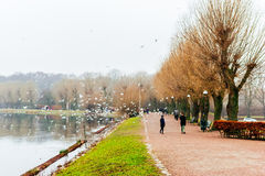 People enjoy in calming nature and winter scenes around lake in center of Malmo in Sweden Royalty Free Stock Images