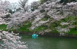 People enjoy cherry blossoms at the park. People enjoy cherry blossoms from rowing boats at Chidorigafuchi Park in Tokyo, Japan royalty free stock photo