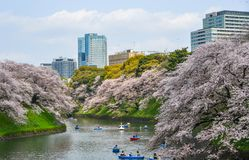 People enjoy cherry blossoms at the park. Tokyo, Japan - Apr 7, 2019. People enjoy cherry blossoms from rowing boats at Chidorigafuchi Park in Tokyo, Japan stock images