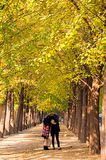 People enjoy the golden autumn in Beijing. People enjoy the golden autumn in the forest of silver birches royalty free stock images