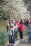 People enjoy magnolia blossoms in Botanical Garden in Kyiv Stock Photo