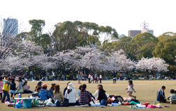 People enjoy relaxing in Sakura blossom park. OSAKA, JAPAN – APR 3, 2009 : Unidentified people enjoy relaxing in Sakura blossom park on Apr 3, 2009 near royalty free stock images