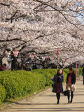People enjoy relaxing in Sakura blossom park Royalty Free Stock Photos