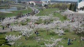 People enjoy spring tree blossom in city center near Neris river stock video footage