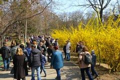 People enjoy sunny sunday at the Botanical Garden in Kyiv royalty free stock image