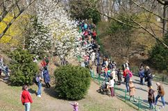 People enjoy sunny sunday at the Botanical Garden in Kyiv royalty free stock photos