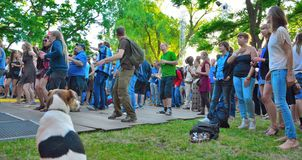 Happy dog watching dancing crowd at festival and watching a band performing Stock Images