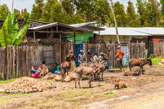People in Ethiopia Royalty Free Stock Photography