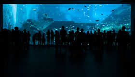 People exiting in front of big aquarium marine tank. Royalty Free Stock Photos