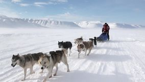 People expedition on dog sled team husky Eskimo road of North Pole in Arctic.
