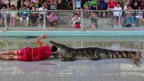 People at extreme crocodile show in Pattaya, Thailand stock video footage