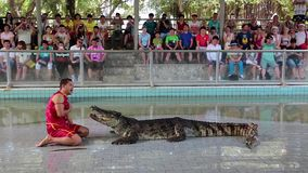 People at extreme crocodile show in Pattaya, Thailand stock video