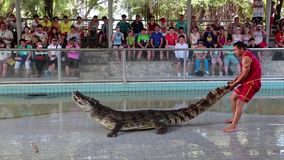 People at extreme crocodile show in Pattaya, Thailand. THAILAND, PATTAYA, APRIL 1, 2014: People at extreme crocodile show in Pattaya, Thailand stock video footage
