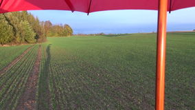 People farmer shadow on agriculture crop field and red umbrella stock video