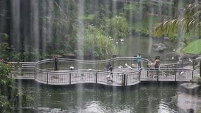 People feed the birds at the zoo in the rain. On a cloudy day stock footage