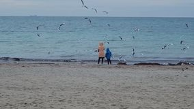 People feed gulls. stock footage