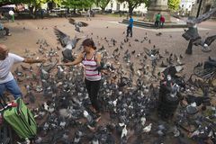People feed pigeons in Santo Domingo, Dominican Republic. Stock Photos