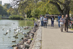 People feed wild birds on lake shore in Keszthely, Hungary. Royalty Free Stock Photography