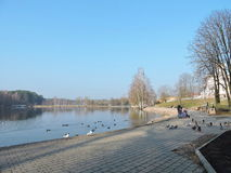 People feeding birds near lake, Lithuania Stock Images