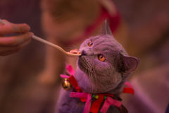 People are feeding cats Royalty Free Stock Images