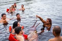 People feeding the famous Pink Dolphin (Boto Rosa) in Amazon, Brazil Royalty Free Stock Images