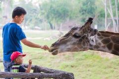 People feeding giraffe Stock Photo